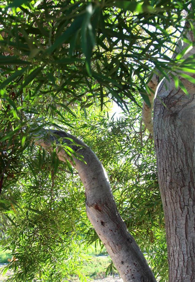 apieceofrainbow-garden-tips1 (1)