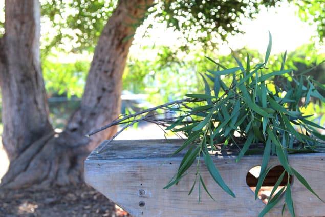 apieceofrainbow-garden-tips1 (13)