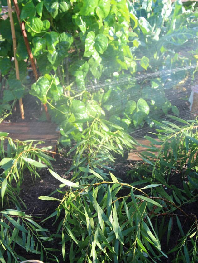 apieceofrainbow-garden-tips1 (3)