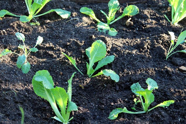 apieceofrainbow-garden-tips1 (8)