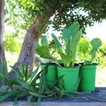 Easy Trick Jump Start Vegetable Garden - A Piece Of Rainbow