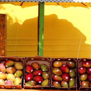 Travel Florida - Tropical Fruit Garden - A Piece Of Rainbow