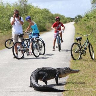 Travel Florida : Everglades National Park | A Piece Of Rainbow
