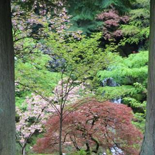 Travel Portland - Japanese Garden - A Piece Of Rainbow