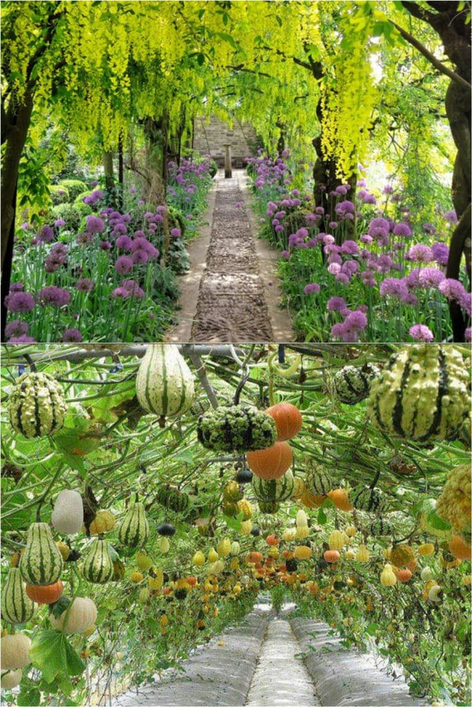 garden Flower tunnel & Gourd Tunnel