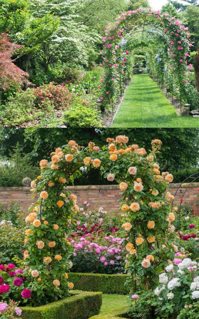 Beautiful Rose Arches and Tunnels