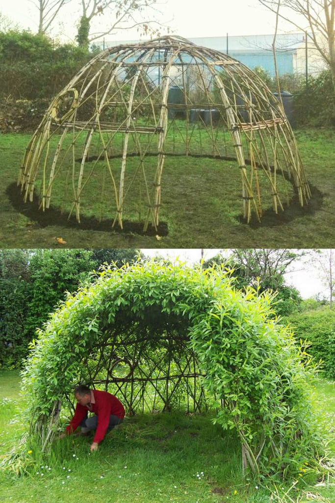 Living Willow Domes