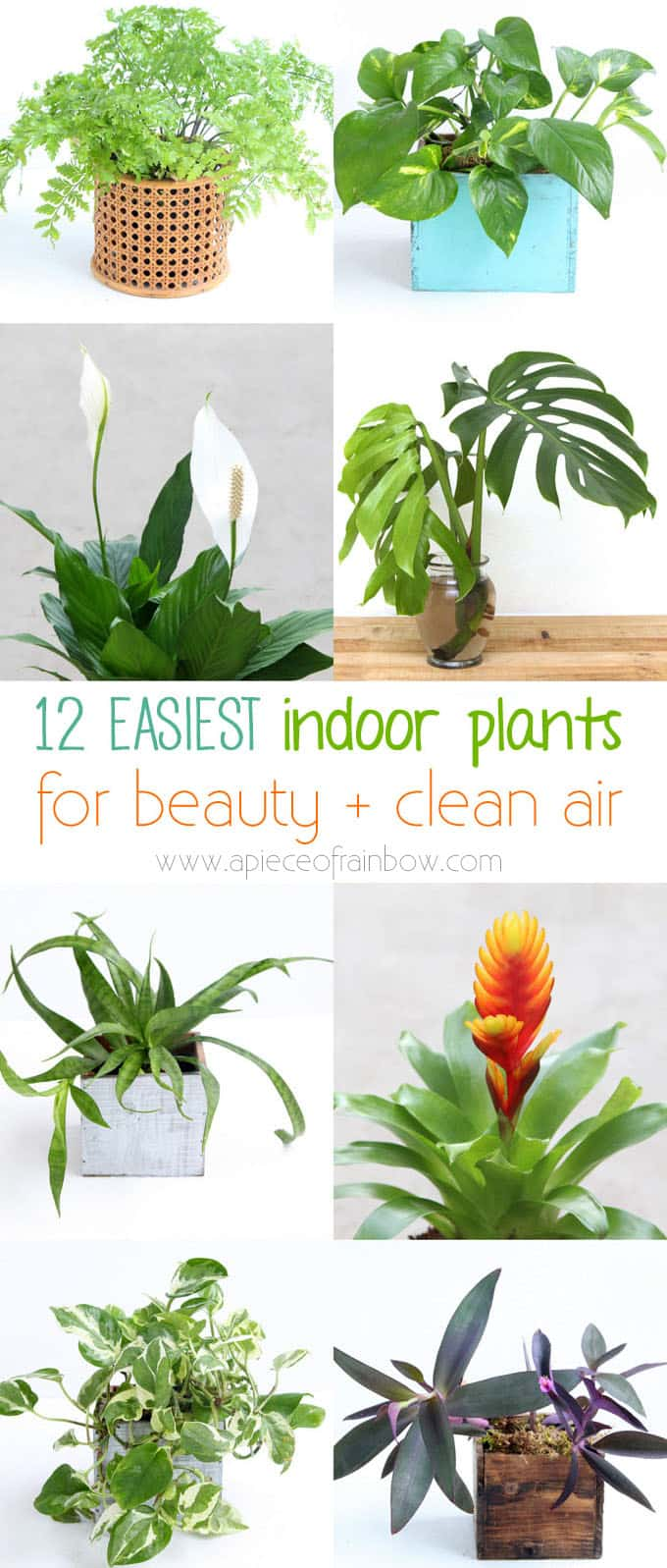 12 Easy Indoor Plants for Beauty + Clean Air - A Piece Of Rainbow