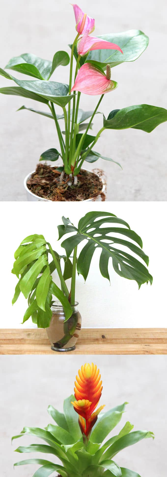 sweet common house plants names. 12 best air purifying indoor plants  bring beauty and well being to your home Easy Air Purifying Indoor Plants for Beauty Well A
