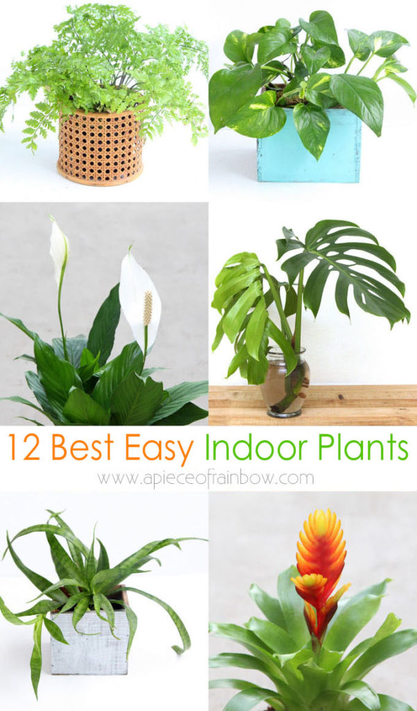 12 best air purifying indoor plants, kill-proof houseplants for low light & small spaces, hanging & flowering plants, care tips on watering & fertilizing!