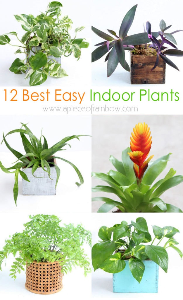 best easy to grow indoor plants, kill-proof houseplants for low light & small spaces