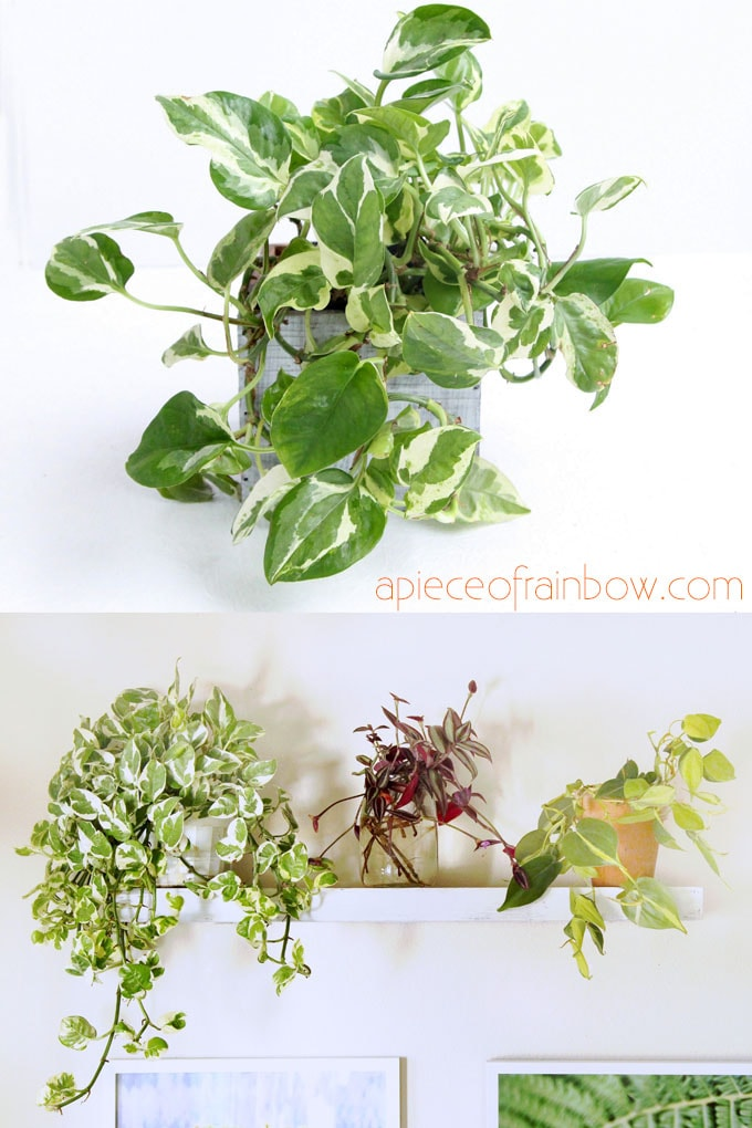 houseplants care tips