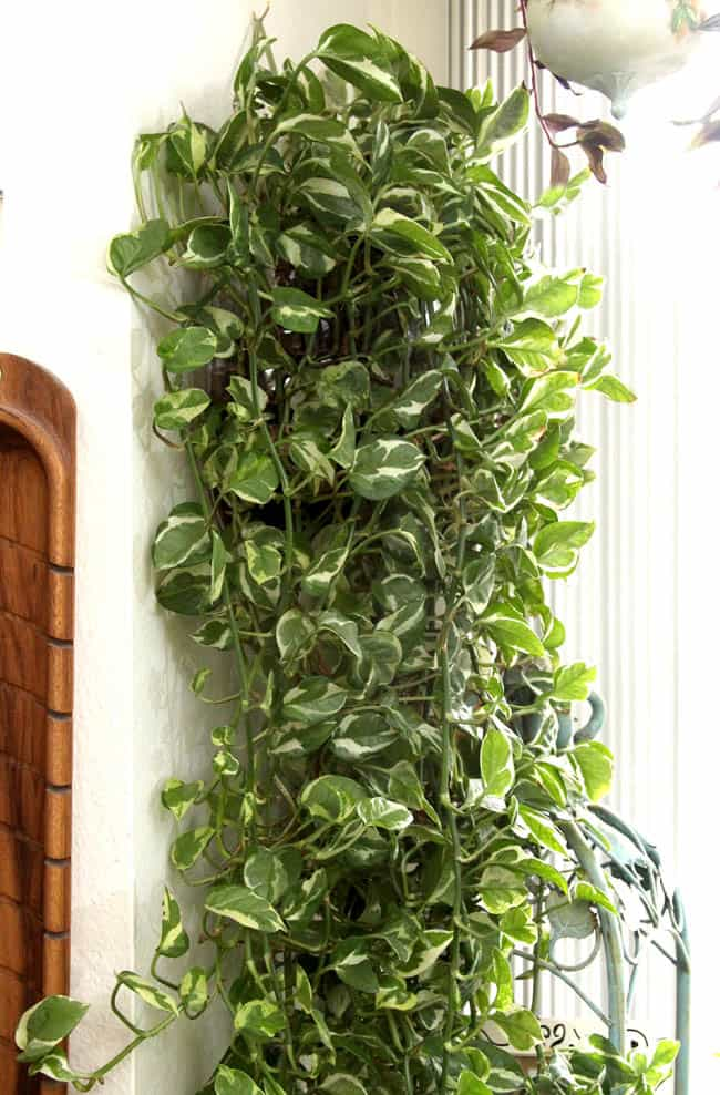 12 easy indoor plants for beauty clean air a piece of for Best easy indoor plants