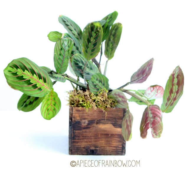 12 Easy Indoor Plants for Beauty + Clean Air - Page 2 of 2 - A ...