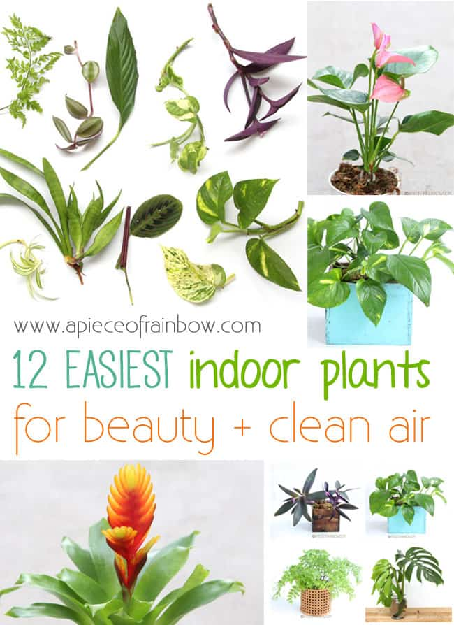 Easy Indoor Plants for beauty and clean air! | A Piece Of Rainbow Blog