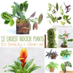 12 best air purifying indoor plants: bring beauty and well-being to your home with these easy to grow house plants, including indoor hanging plants, flowering plants, indoor plants for low light, and plant care tips! | A Piece Of Rainbow Blog