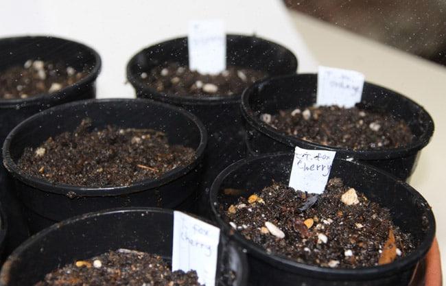 seed-starting-tips-apieceofrainbowblog (12)