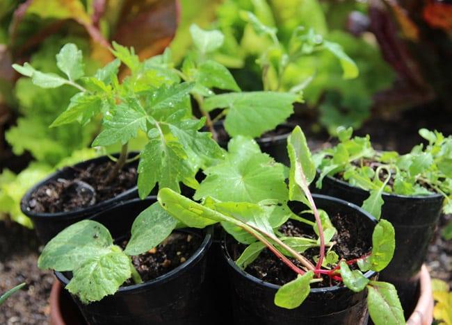 seed-starting-tips-apieceofrainbowblog (2)