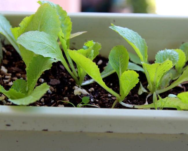 seed-starting-tips-apieceofrainbowblog (6)