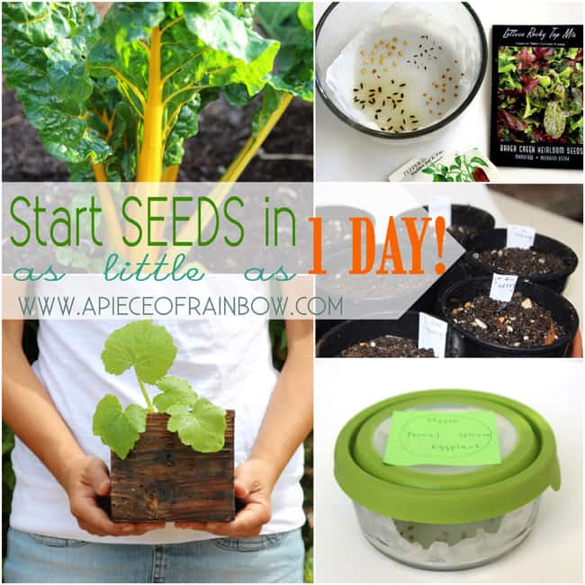 Start seeds fats and easy way | A Piece of Rainbow