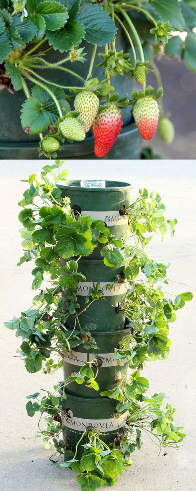 DIY Recycled Strawberry Tower Video