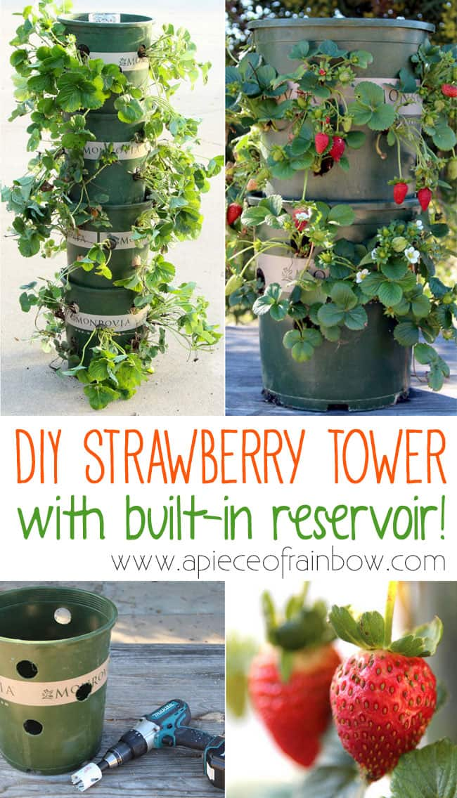 DIY Strawberry Tower with reservoir! | A Piece Of Rainbow Blog