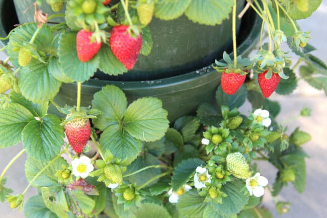strawberry-tower-apieceofrainbowblog (20)