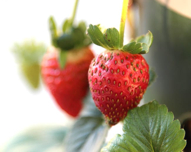 strawberry-tower-apieceofrainbowblog (29)