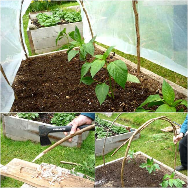DIY-Greenhouses-apieceofrainbowblog (21)