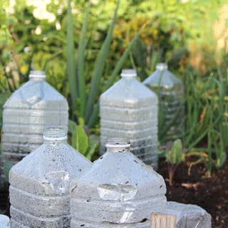 DIY bottle greenhouse and success tips!   A piece of rainbow blog
