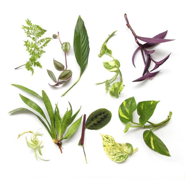 indoor-plants-apieceofrainbow (10)