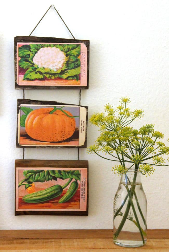 vintage-seed-packet-wall-art-apieceofrainbow (12)