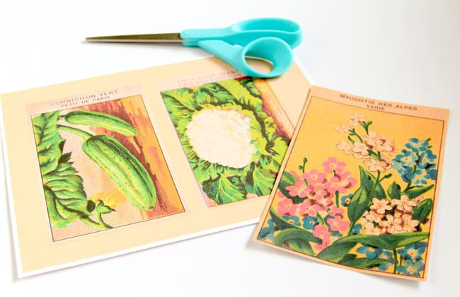 vintage-seed-packet-wall-art-apieceofrainbow (8)