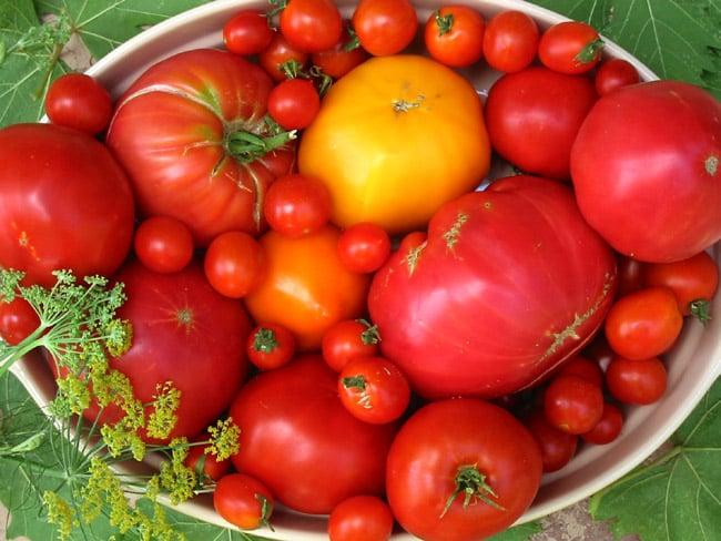 propagate-tomatoes-apieceofrainbowblog (2)