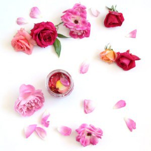 How to make rose oil from fresh roses in a yogurt maker! It's so easy, requires almost no work, and the rose oil smells heavenly!