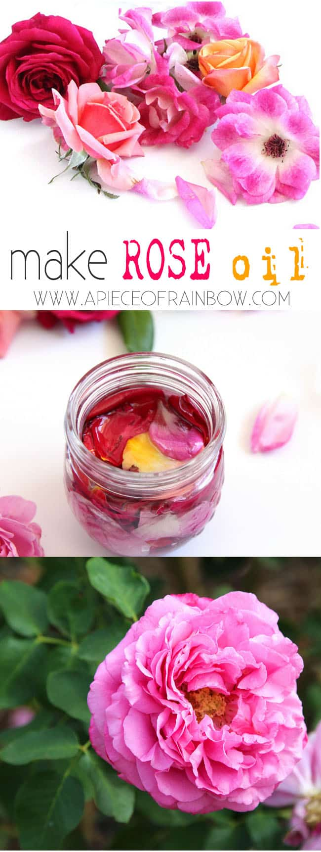 make_rose_oil_apieceofrainbowblog