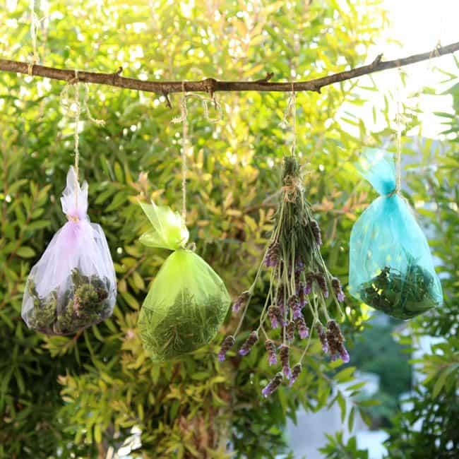 how_to_dry_herbs_apieceofrainbowblog (10)