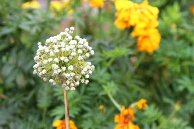 how_to_dry_herbs_apieceofrainbowblog (3)
