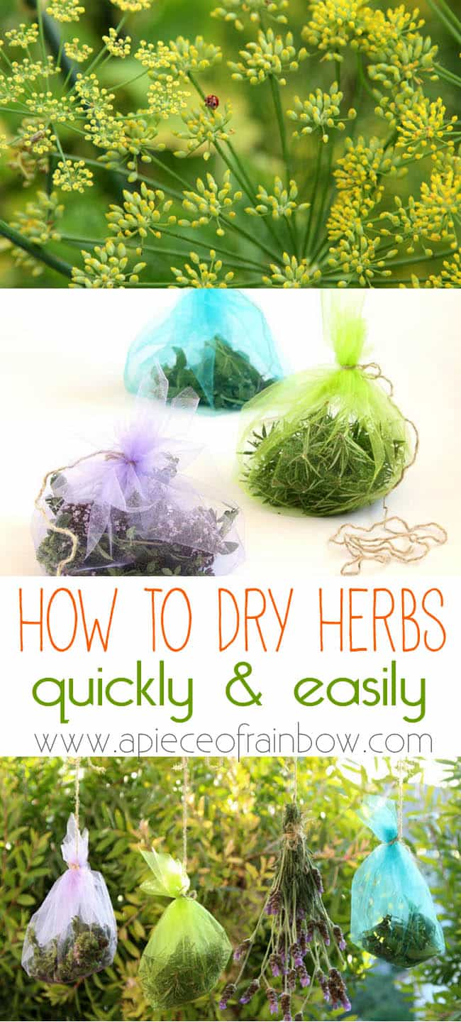 how_to_dry_herbs_apieceofrainbowblog