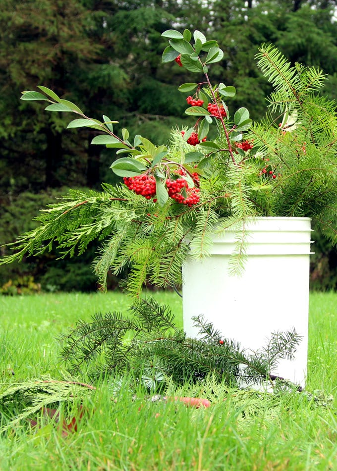 Gather some fresh evergreen cuttings and make THIS in 15 minutes!