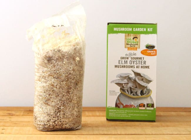 How to grow mushrooms in used coffee grounds and cardboard : this simple and fun method requires no sterilization! Detailed tutorial with lots of resources!