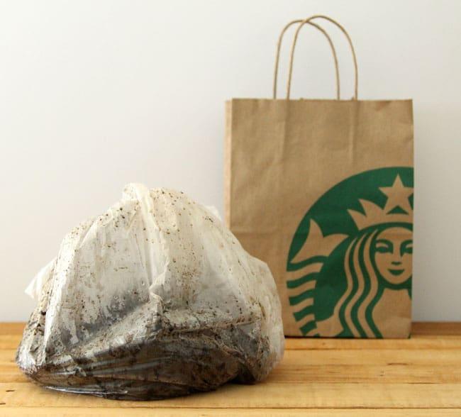 starbucks coffee grounds for mushroom growing