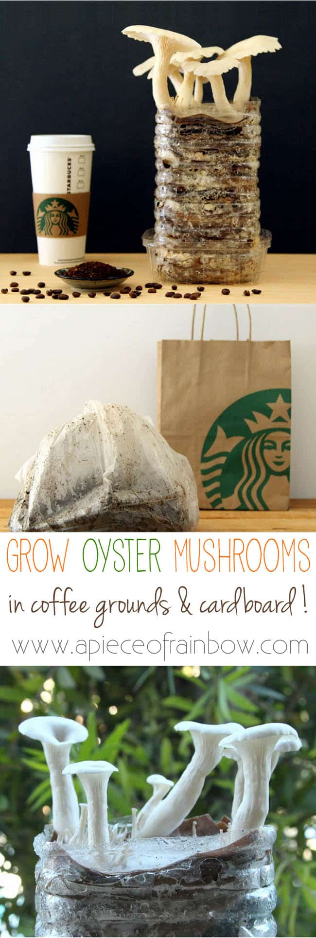grow-mushrooms-on-coffee-grounds-apieceofrainbowblog