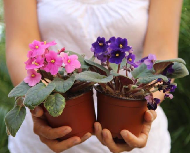 grow-african-violet-apieceofrainbowblog (2)