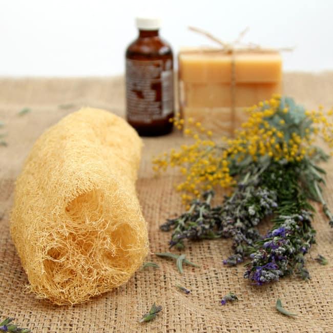 grow-luffa-sponge-gourd-apieceofrainbowblog (1)