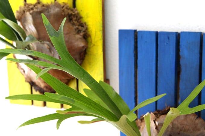 mount-staghorn-fern-apieceofrainbowblog (10)