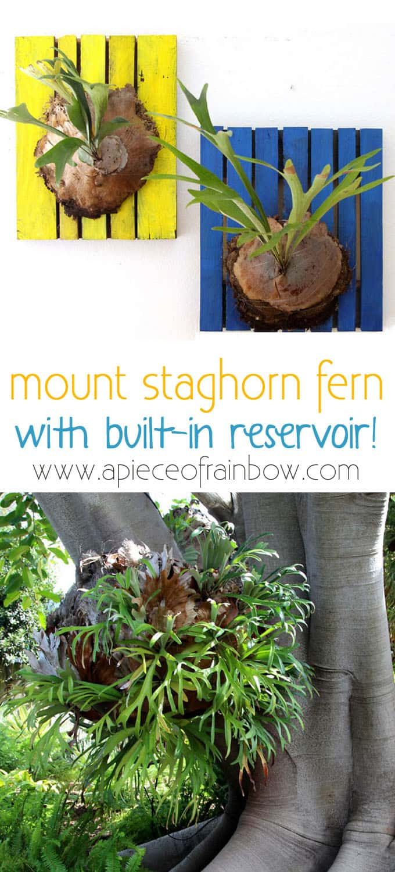 mount-staghorn-fern-apieceofrainbowblog