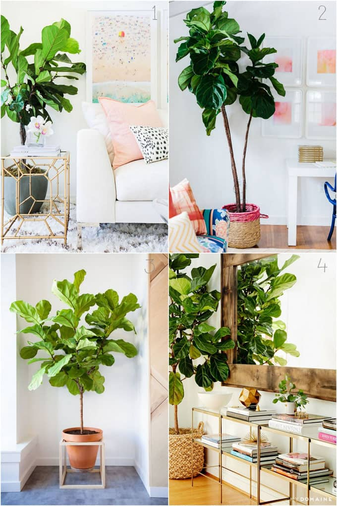 propagate-fiddle-leaf-fig-apieceofrainbowblog (18)