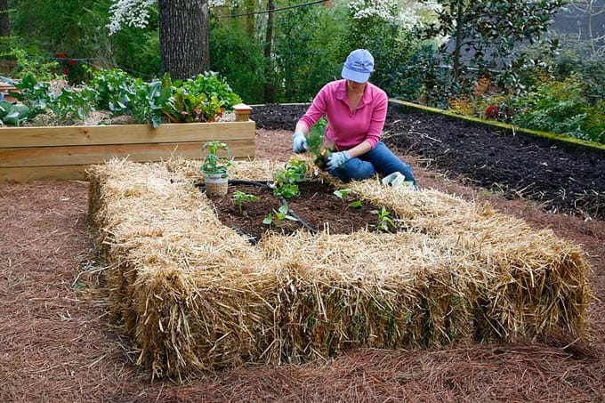 Straw bale above ground garden beds