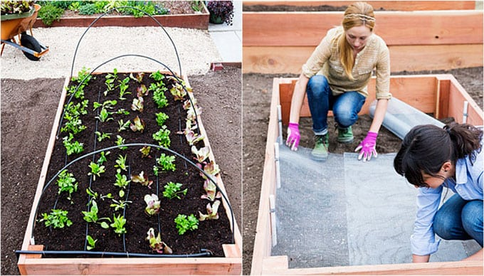 all-about-raised-bed-garden-apieceofrainbow (4c)